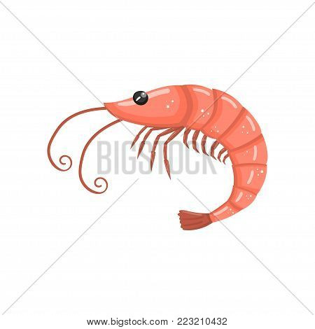 Shrimp, fresh seafood cartoon vector Illustration on a white background