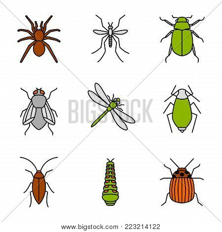 Insects color icons set. Spider, mosquito, maybug, cockroach, housefly, dragonfly, aphid, caterpillar, colorado bug. Isolated vector illustrations