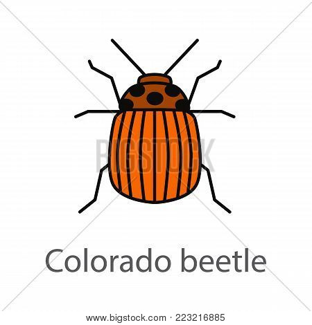 Colorado beetle color icon. Insect pest. Potato bug. Isolated vector illustration