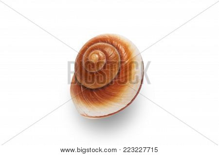 Sea shell on a white background for isolation