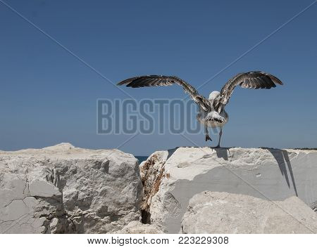 A seagull spreads its wings to take off from light stones into a blue sky.