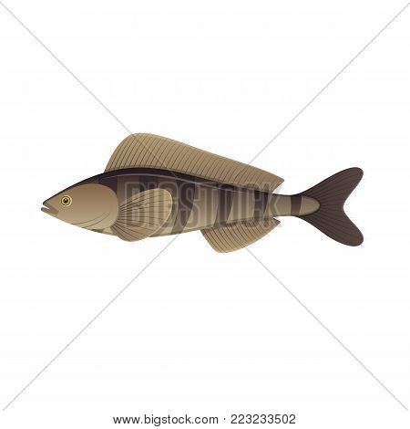 Sea fish. Colorful fish of sea, swimming on blue deep sea bottom. Fish and shellfish, eating, delicious menu, market fish to around the world. Ingredient for cooking, tasty food. Vector illustration.