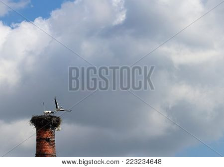 Stork leaving the nest on the factory chimney