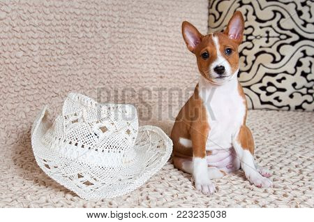 red funny dog puppy with big white carnival hat