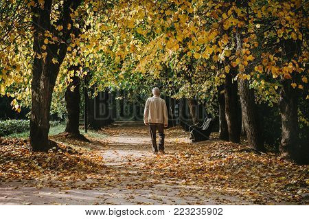 A lonely man walks through the autumn park