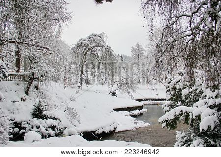 beautiful moment,story, landscape in the English garden in winter, many snow-covered trees, drooping branches, a small shallow pond, the winter's tale