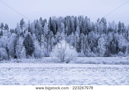 Winter landscape with frosty trees and snow at day time in Finland