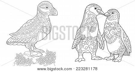 Coloring Page Adult Book Puffin Seabird Of North Pacific And Atlantic Oceans