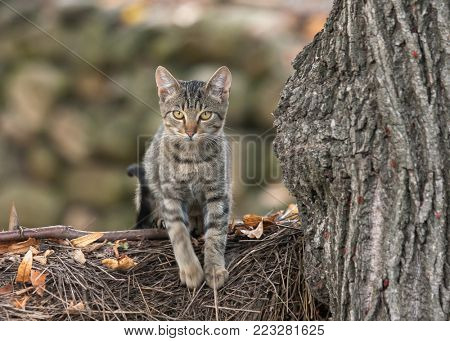 Domestic cat climbing on tree branch looking cute