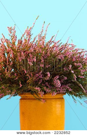 Vase Of Heather