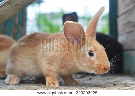 Furry bunny. A charming animal that can become your best friend. Do not pass by him!