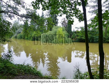 Photo of a willow tree partially submerged in the murky water