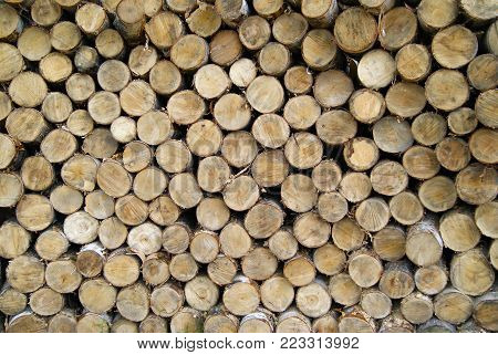background: the ends of spilled birch logs stacked in a stack