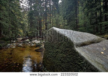 Brook or creek in nature pine Scandinavian mountain forest in evening light. Huge wet cold rock stones covered with northern moss. Nordic spruce tree forest background Travel concept. Portrate view.