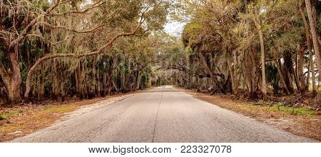 Moss Covered Trees Line A Road Along The Wetland And Marsh At The Myakka River State Park