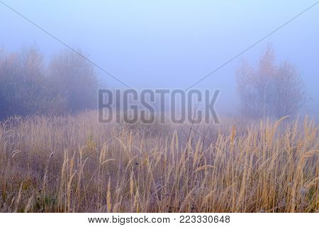 In the foreground the yellow tall grass in the distance one can see trees, the rest is hidden in the mist.