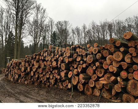 a lot of felled, dead tree trunks on the background of the living forest, lie on each other, dark gloomy weather
