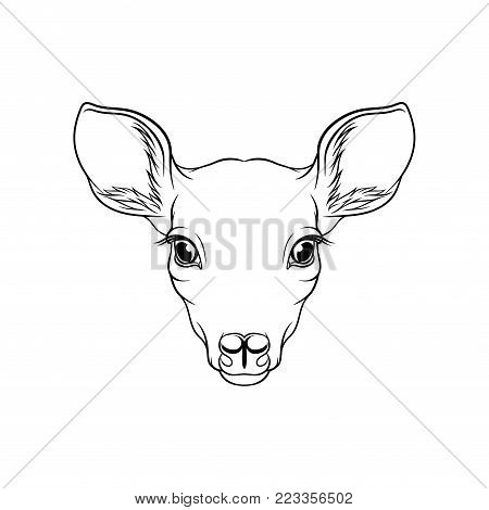 Sketch of roe deers head, portrait of forest animal black and white hand drawn vector Illustration on a white background