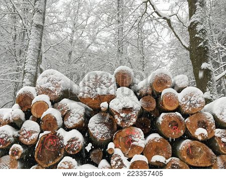 dusted with snow felled trees, stacked on top of each other, pyramid, in the background, live trees with white snow from the canopy, branches, tree felling