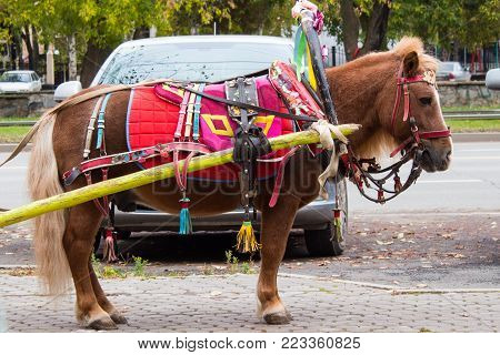Brown Pony With Carriage Buggy For Children In City Street.