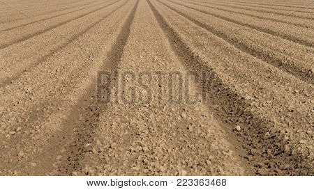 Farm land, rows recently plowed and shaped for planting. Raised beds are a terrific option for root crops because soil is loose, allowing vegetables to expand easily.