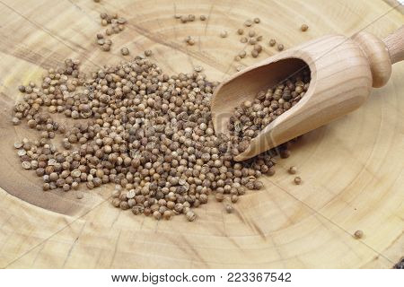 dry coriander seeds and wooden spoon macro