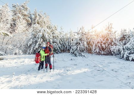 Tourists Are Walking In The Winter Forest.
