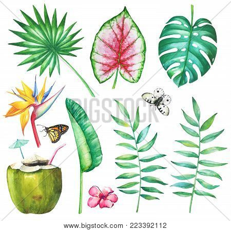 Watercolor set of tropical palm, philodendron, coleus, strelitzia leaves and flowers, butterflies apollo and monarch and coconut cocktail with straw on white background