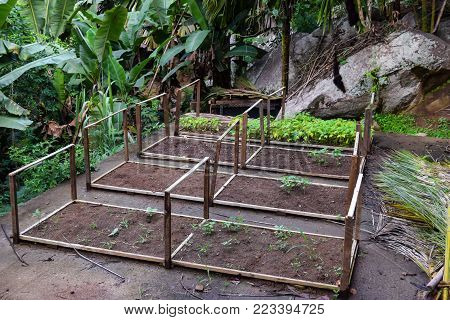 Gardening in the Jungles in Seychelles. Few bed places of dirt are ready to plant vegetables or spices in the middle of the jungle.