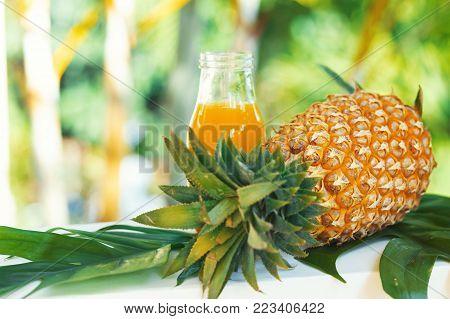 Dragon Fruit Or Pitaya Pitahaya Plantation