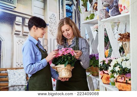 small flower business. Women working in flower shop. Female sales assistant working as florist and holding bouquet. two sellers in a flower shop.