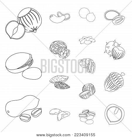 Different kinds of nuts outline icons in set collection for design.Nut Food vector symbol stock  illustration.
