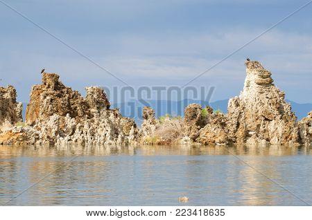 Osprey nesting on top of tufas in Mono Lake