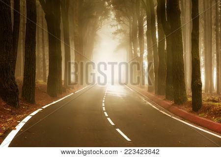 Asphalt road in foggy forest. National park Teide, Tenerife island