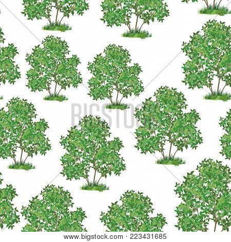 Seamless Pattern, Green Lilac Bush Isolated on Tile White Background. Vector