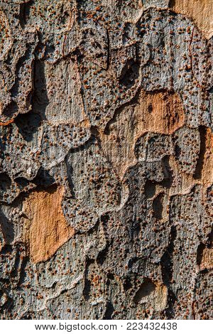 Ancient Tree Texture