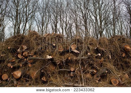 pile of felled trees in the forest