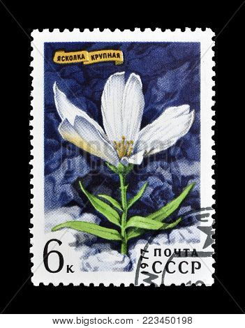 SOVIET UNION - CIRCA 1977 : Cancelled postage stamp printed by Soviet Union, that shows Great Chickweed.