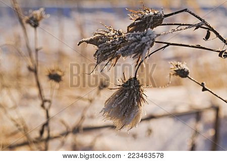Stems covered with hoarfrost on a blurred background