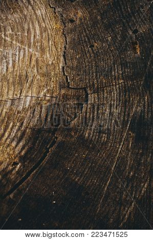 Wood texture and background. Cut tree trunk background. Tree trunk close up. Macro view of cut tree trunk texture. Wood texture and background for graphic design. Timber industry.
