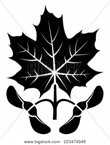 vector maple leaf and seeds isolated on white background