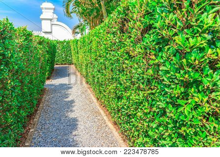 The walk way of bushes and green trees.