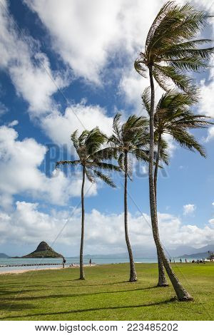 Kualoa regional park scenic landscape on a sunny day with blue sky and clouds and a breeze blowing palm trees. Oahu, Hawaii, USA.