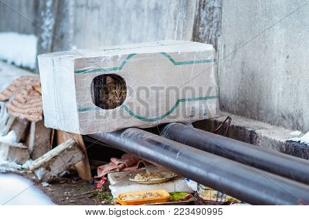Stray Animals In Winter, Homeless Cat Sitting On A Heating Main, Homeless Frozen Cat Warms On Pipes,