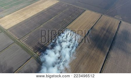The burning of rice straw in the fields. Smoke from the burning of rice straw in checks. Fire on the field.