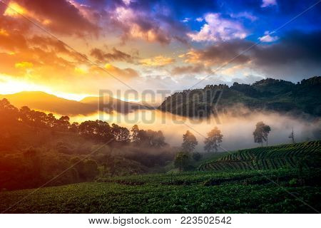 Morning Mist with Sunrise at strawberry field at doi angkang , chiang mai , Thailand