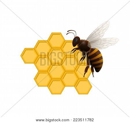 Natural sweet delicacy concept with honeybee on honeycomb isolated on white background. Traditional and healthy vegan product vector illustration. Insect sign for organic food production design.