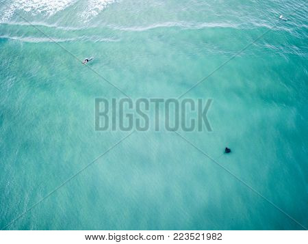 Aerial photograph of a manta ray swimming along the coastline of the Gold Coast, Queensland, Australia.
