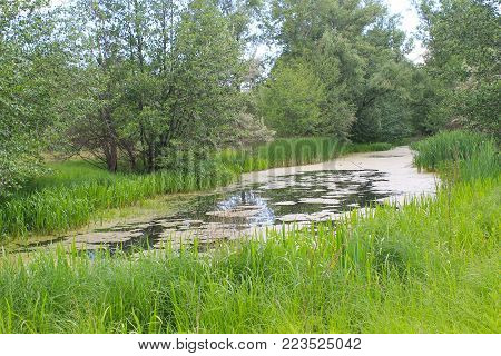 Small river overgrown with duckweed. Summer landscape