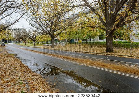 Canberra, Australia - Apr 26, 2017: Leaves in autumn colors fallen by the roadside along National Circuit, Canberra, Australia. Image captured on an overcast day.